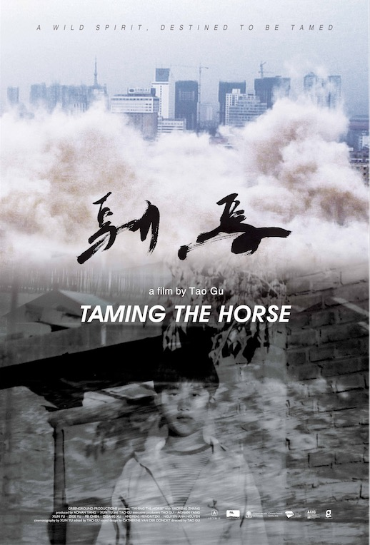DCCFF - TAMING THE HORSE